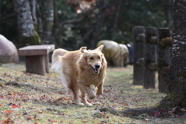 垂水公園で走る