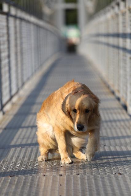 つり橋の上 (1)
