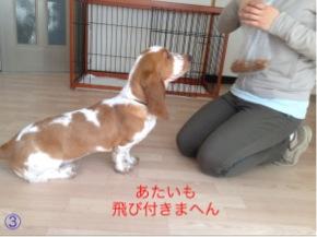 2_20120323101310.jpg