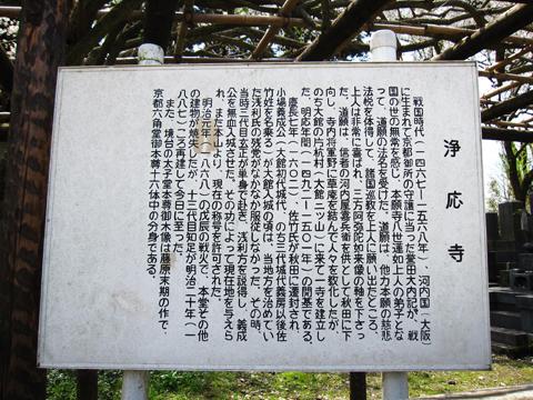 浄応寺 桜 1