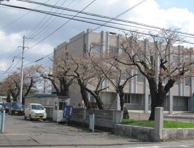 大館地方裁判所の桜