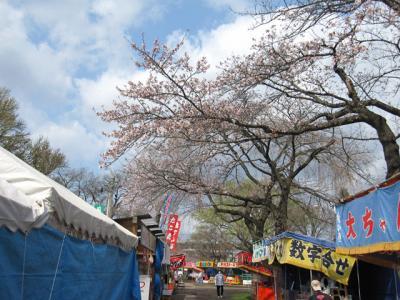出店の上の桜