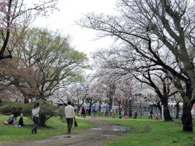 5月3日桂城公園3