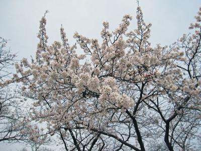 5月3日桂城公園5