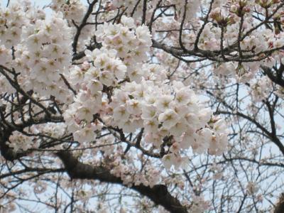 5月3日桂城公園6