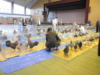 比内鶏 金八鶏 展覧会