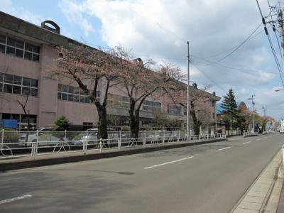 城南小学校の桜