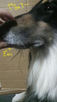 2010051321440000_convert_20100513225003.jpg