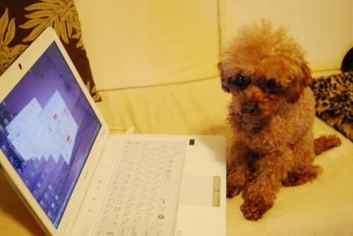 パソコン犬1