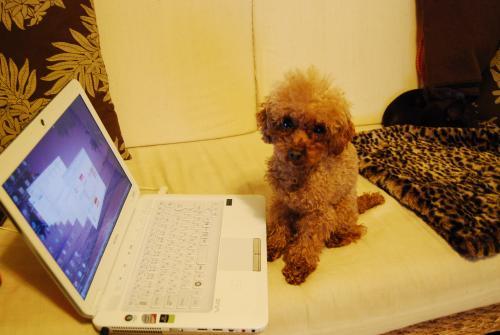 パソコン犬2