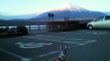 いぬと富士山