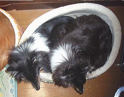 20091103oyasumi1.jpg