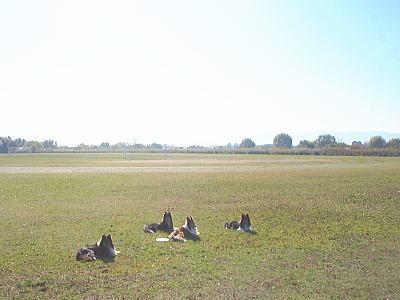 20091204sanpo2.jpg