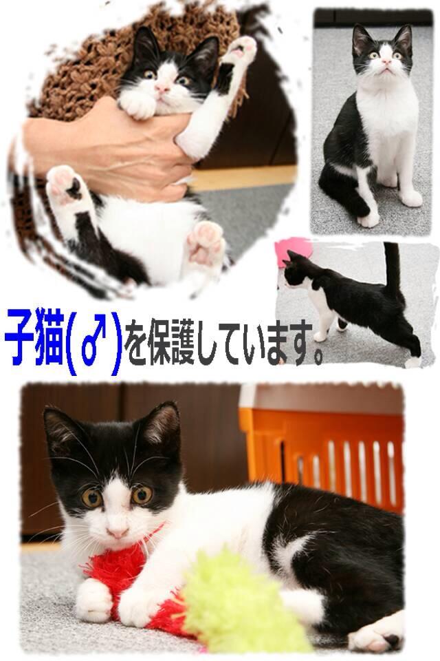 moblog_1588a553.jpg