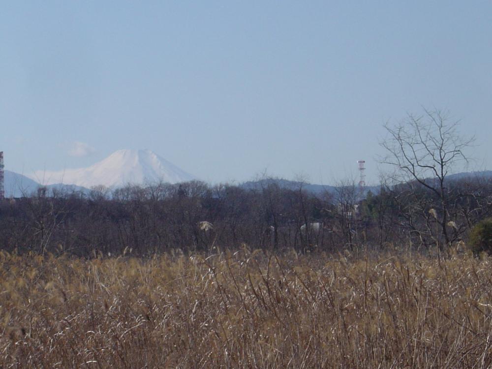 多摩川CRから臨む富士