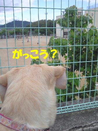 2010_0527_0804.jpg