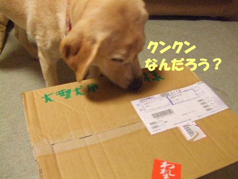 c2010_0507_212.jpg