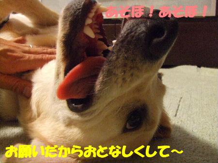 c2010_0619_215413.jpg