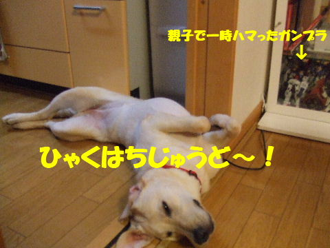 c2010_0630_190848.jpg