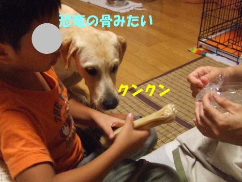 c2010_0909_200350.jpg