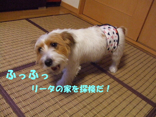 c2010_0912_161115.jpg