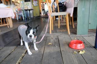 カフェでランチ