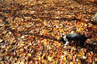 落ち葉と影