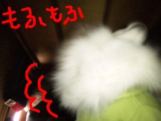 100204_061.jpg