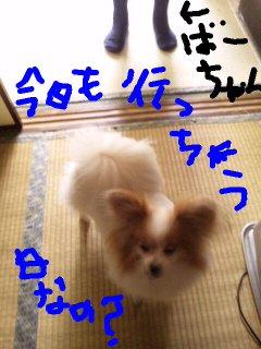 moblog_392fb53e.jpg