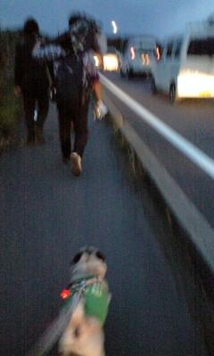 報道犬ダンプ1