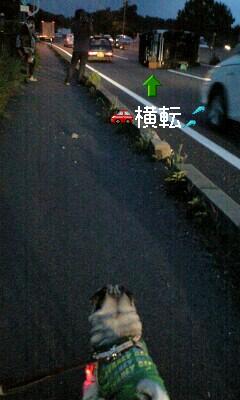 報道犬ダンプ3