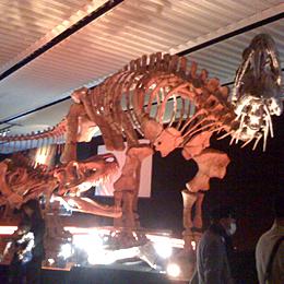 恐竜展03