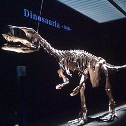 恐竜展01