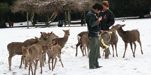 2011年2月奈良02