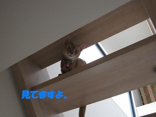 IMG_kaidan.jpg