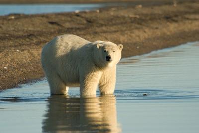 JESフォーラム「アラスカ」河内さん 20111012
