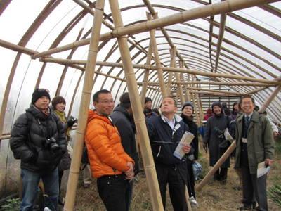 竹のビニールハウス