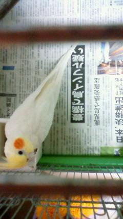 ぴのこと新聞