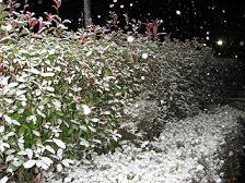 雪だよぉ~