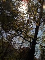 2010_0426_0917.jpg