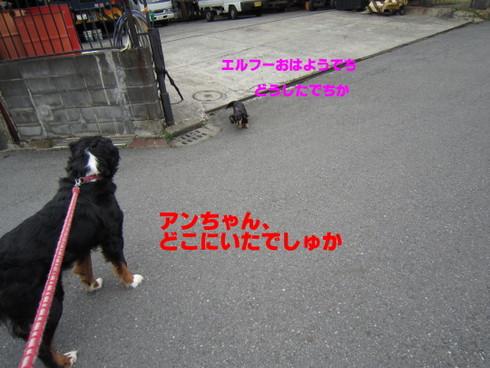 IMG_3220-001.jpg