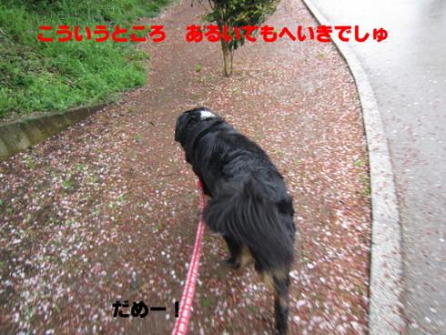 IMG_3268.jpg