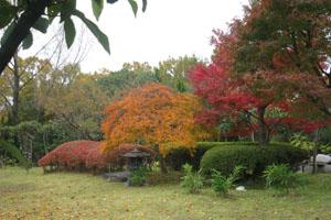 2009.11.24今城塚古墳blog01