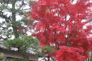 2009.11.29天龍寺blog02