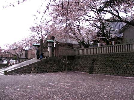 sakura_utasu2.jpg