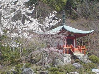 2010年醍醐寺桜 010-1