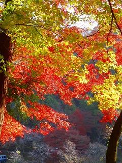 五色に色づく紅葉・・