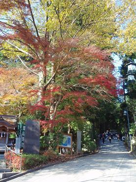高尾山の紅葉3