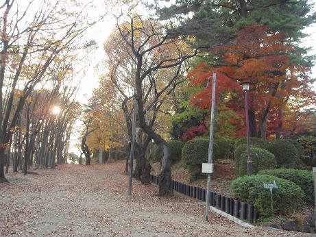富士森公園1
