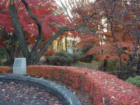 富士森公園3
